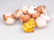 Ostern-Küken Stockfoto