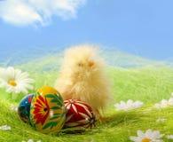 Ostern-Küken und gemaltes buntes Osterei Stockfotos