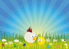 Ostern - Küken und Hahn auf grüner Wiese Stockbild