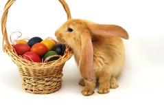 Ostern-Kaninchen Stockfotografie