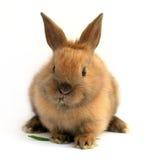 Ostern-Kaninchen Lizenzfreies Stockfoto