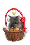 Ostern-Kaninchen innerhalb eines Korbes voll der Ostereier Stockbild