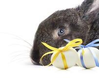 Ostern-Kaninchen mit Eiern mit festlichem blauem und gelbem Bogenisolat stockbild
