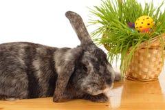 Ostern-Kaninchen und Korb Lizenzfreies Stockbild