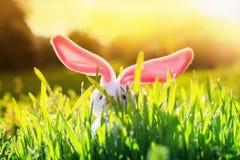 Ostern-Karte mit den rosa Ohren des lustigen Kaninchens und Stock aus der grünen sonnigen hellen Wiese des Grases heraus im Frü lizenzfreies stockfoto