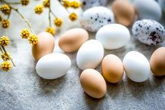 Ostern-Karte mit Eiern und Blume auf hellem Hintergrund Stockbilder