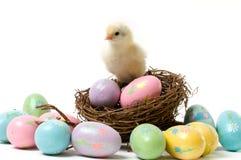 Ostern-Küken im Nest Lizenzfreies Stockbild