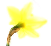 Ostern lilly Stockbild