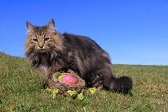 Ostern-Nest Lizenzfreie Stockfotografie
