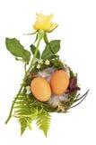 Ostern-Nest mit twio Eiern und Federn stockfoto