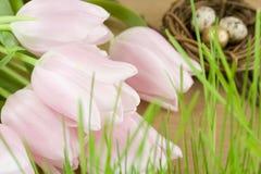 Ostern-noch Leben Stockbilder