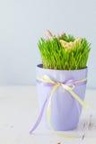 Ostern-Plätzchen mit Gras Lizenzfreies Stockfoto