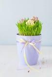 Ostern-Plätzchen mit Gras Stockbilder