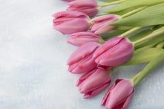 Ostern-Tulpen Stockfoto