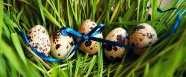 Ostern-Wachteleier im Gras Lizenzfreies Stockfoto