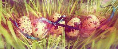 Ostern-Wachteleier im Gras Stockfotos