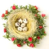 Ostern-Wachteleier im Nest Lizenzfreie Stockfotografie