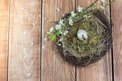 Ostern - Weidennest mit Wachtel-Ei mit blühenden Niederlassungen stockfotos