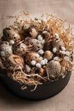 Ostern-Zusammensetzung von Ostern-Wachteleiern im Nest auf hellem Hintergrund Retro- Abbildung der Weinlese style stockbilder