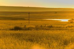 Ostfreistaatlandschaft in Südafrika Lizenzfreie Stockfotos