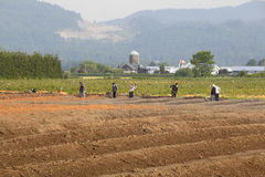 Ostindische kanadische Landarbeiter Stockbild