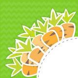 Ostkarottenmuster auf einem Grün Lizenzfreies Stockbild