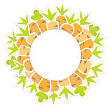Ostkarottenmuster auf einem Weiß Stockbild