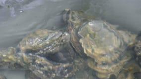 Ostra na água filme