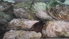 Ostra na ?gua Grupo de diversas ostras frescas na ?gua clara vídeos de arquivo