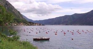 Ostra que cultiva em Montenegro video estoque