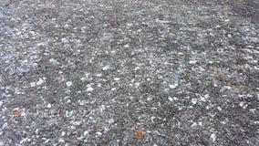 Ostra y acera de la concha marina Fotos de archivo libres de regalías