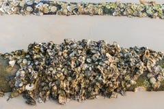 ostras Imagen de archivo libre de regalías