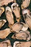 Ostras cruas frescas em um mercado de peixes Fotos de Stock Royalty Free