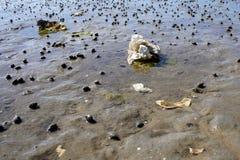 Ostras en la arena Imagen de archivo libre de regalías