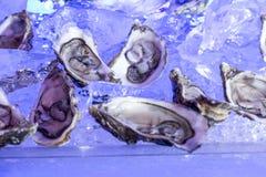 Ostras en los mariscos del hielo Imágenes de archivo libres de regalías