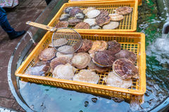 Ostras frescas em uns recipientes, mercado de Hakodate Fotografia de Stock