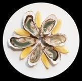 Ostras frescas en la placa con el limón fotografía de archivo libre de regalías