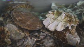 Ostras frescas na água no mercado de peixes video estoque