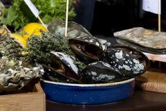 Ostras, marisco vivo no shell, marisco, alimento Fotos de Stock
