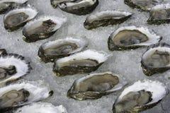 Ostras no meio shell, Wellfleet miliampère Fotografia de Stock Royalty Free