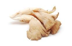 Ostreatus Pleurotus Στοκ Φωτογραφίες
