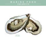 ostrica Alimento marino Immagine Stock Libera da Diritti