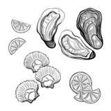 Ostrica, cappasanta americana Frutti di mare illustrazione vettoriale