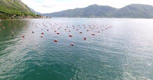 Ostrica che coltiva nel Montenegro stock footage