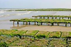 Ostrica-coltura in Les Dunes de Varreville Fotografia Stock Libera da Diritti