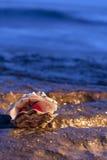 Ostrica con il pomodoro Immagini Stock