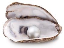 Ostrica con la perla isolata Fotografie Stock