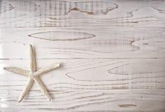 Ostrica di perla e perla sulla linea costiera del mare Fotografia Stock