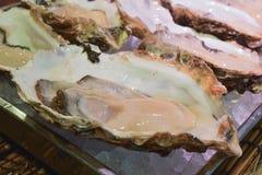 Ostrica fresca Immagine Stock