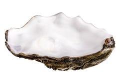 Ostrica fresca isolata con ombra Percorso di ritaglio fotografie stock libere da diritti